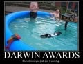 Darwin-Awards.jpg